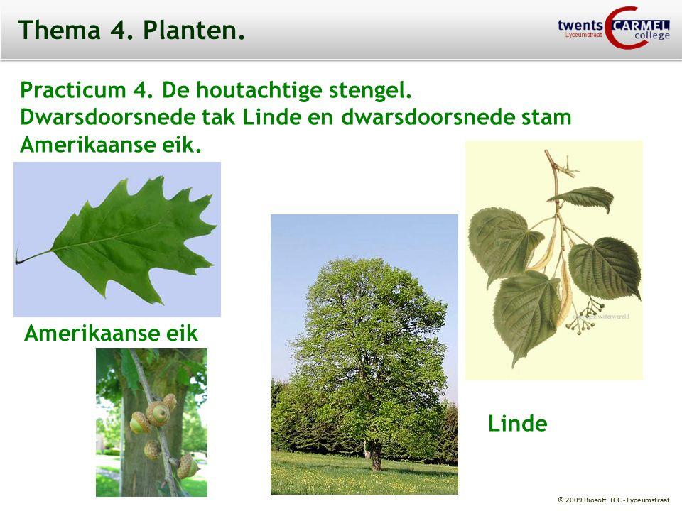 Thema 4. Planten. Practicum 4. De houtachtige stengel.