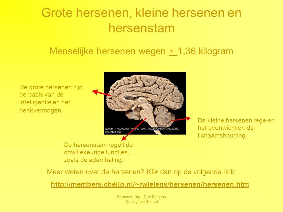 Grote hersenen, kleine hersenen en hersenstam