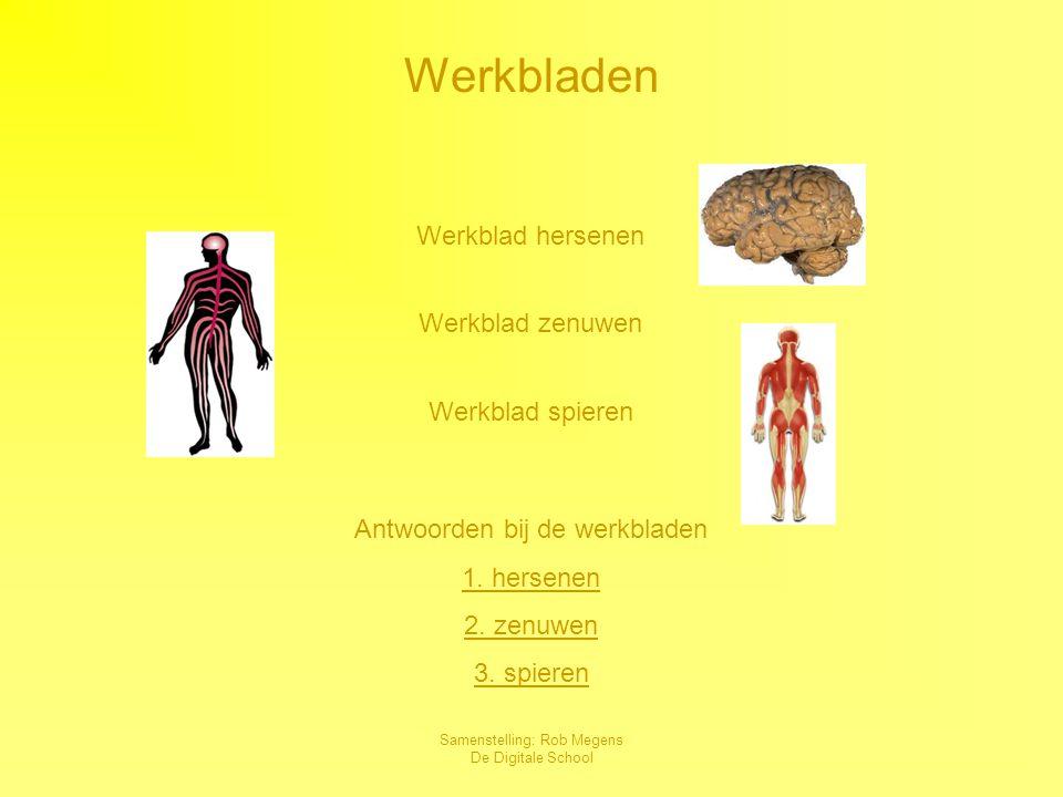 Werkbladen Werkblad hersenen Werkblad zenuwen Werkblad spieren