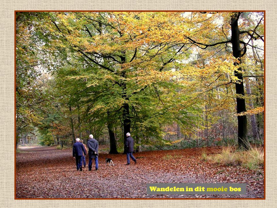 Wandelen in dit mooie bos