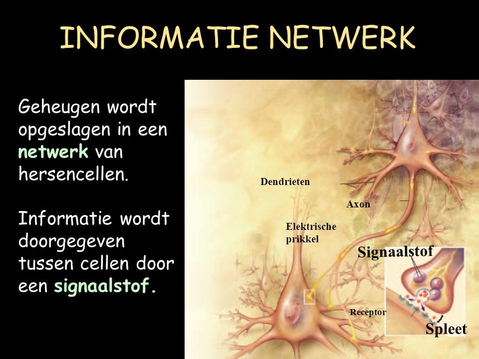 INFORMATIE NETWERK Geheugen wordt opgeslagen in een netwerk van hersencellen. Informatie wordt doorgegeven tussen cellen door een signaalstof.