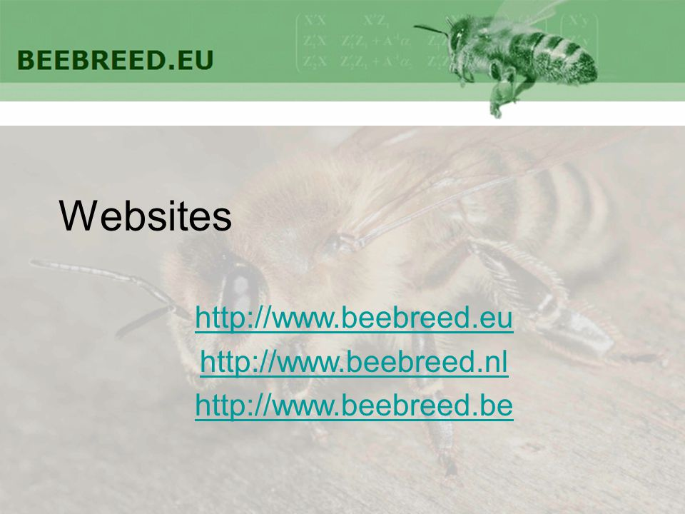 Websites http://www.beebreed.eu http://www.beebreed.nl