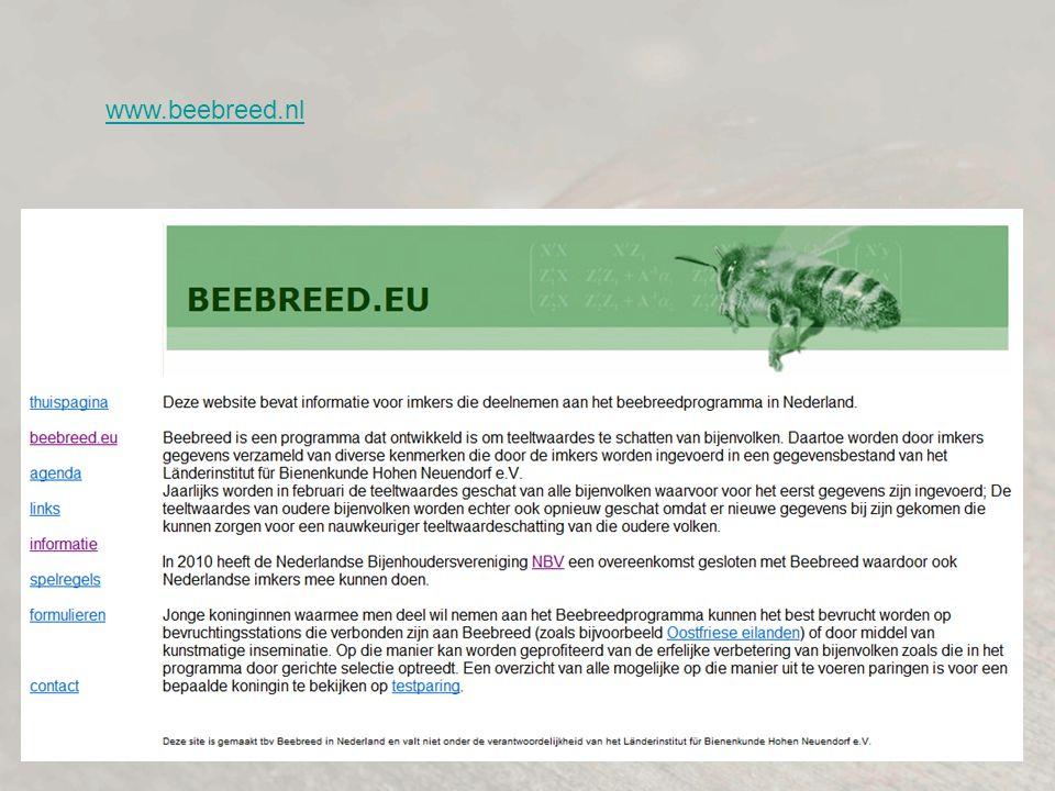 www.beebreed.nl