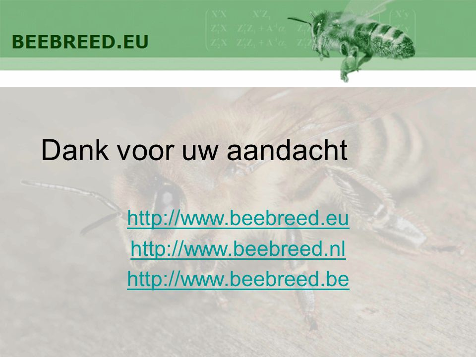 http://www.beebreed.eu http://www.beebreed.nl http://www.beebreed.be