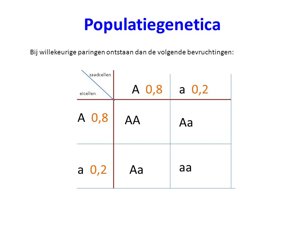 Populatiegenetica A 0,8 a 0,2 A 0,8 AA Aa aa a 0,2 Aa