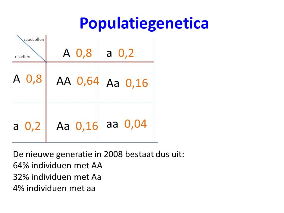 Populatiegenetica A 0,8 AA 0,64 Aa 0,16 aa 0,04 a 0,2