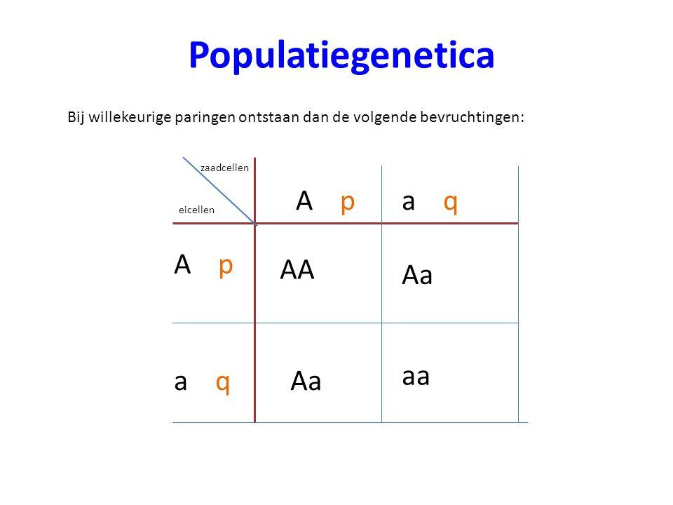 Populatiegenetica A p a q A p AA Aa aa a q Aa