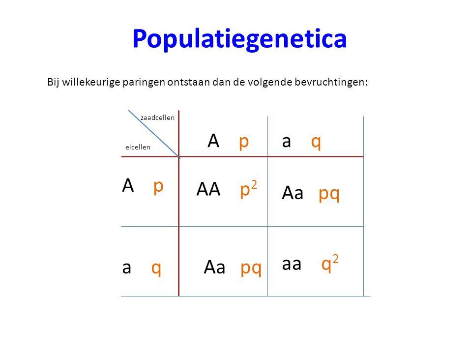 Populatiegenetica A p a q A p AA p2 Aa pq aa q2 a q Aa pq