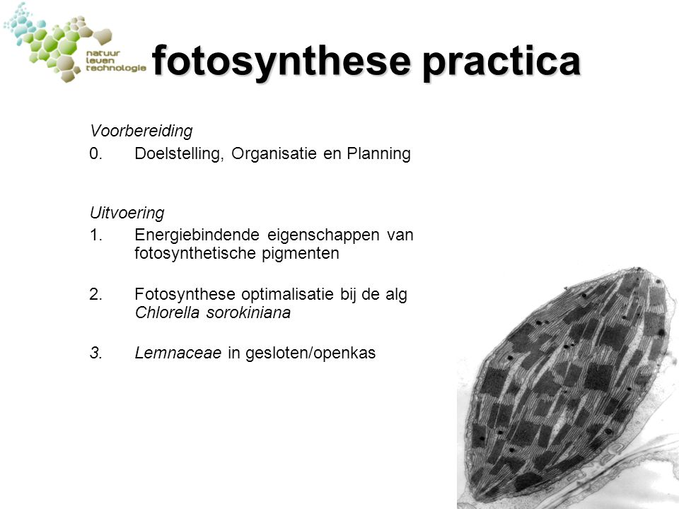 fotosynthese practica