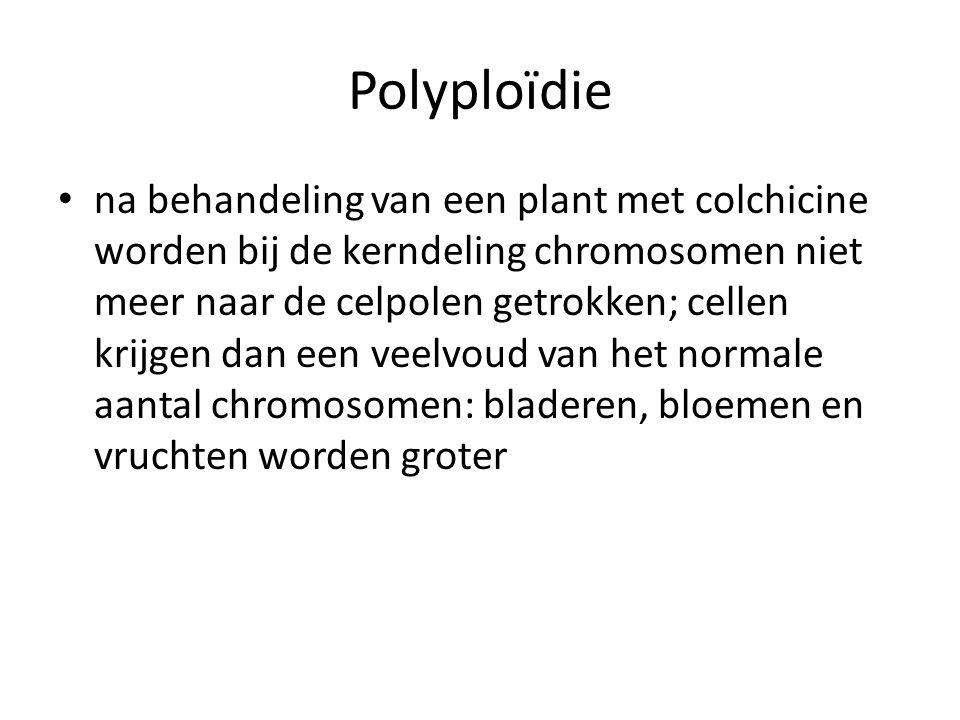 Polyploïdie