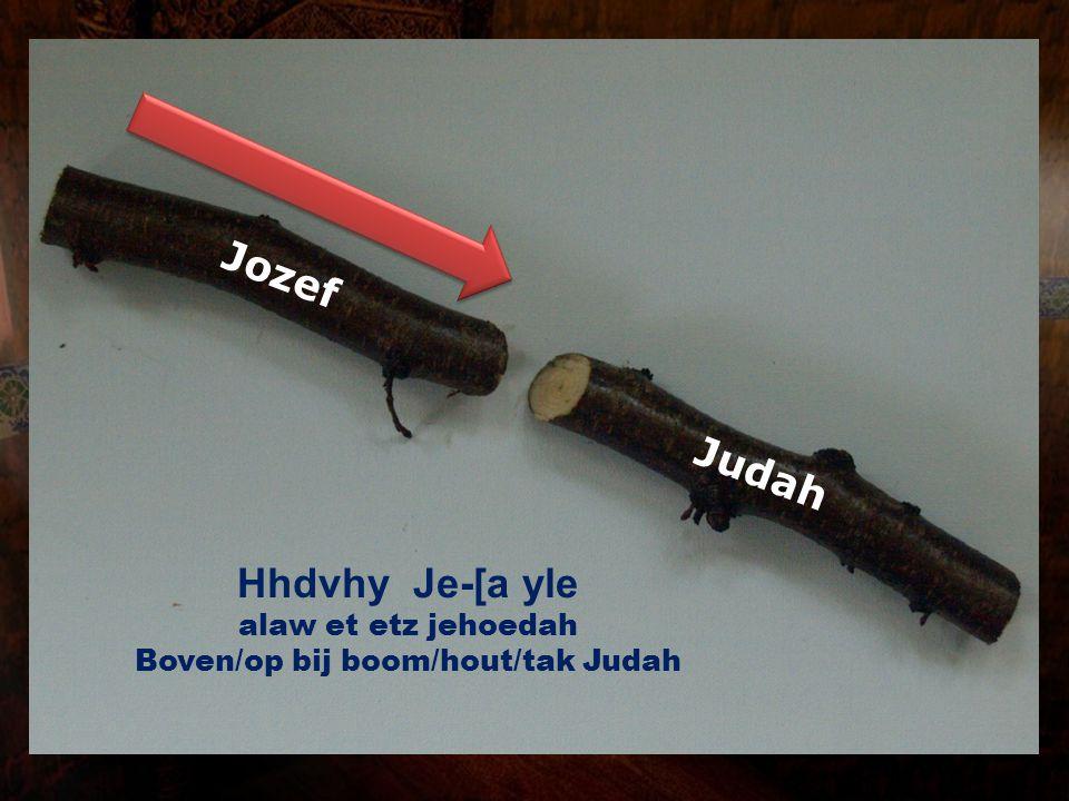 Boven/op bij boom/hout/tak Judah