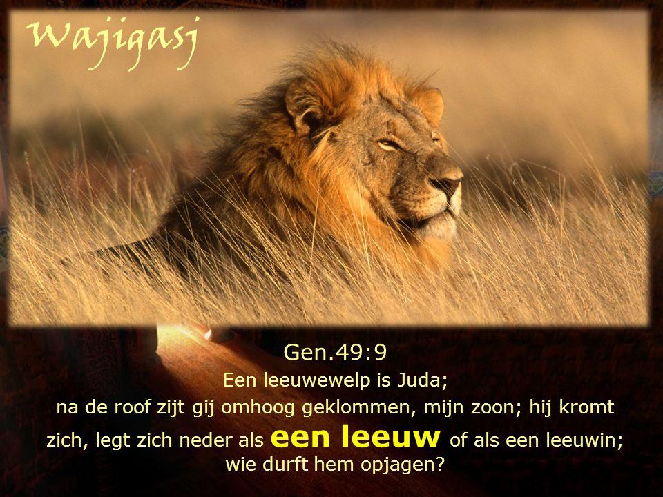Een leeuwewelp is Juda;