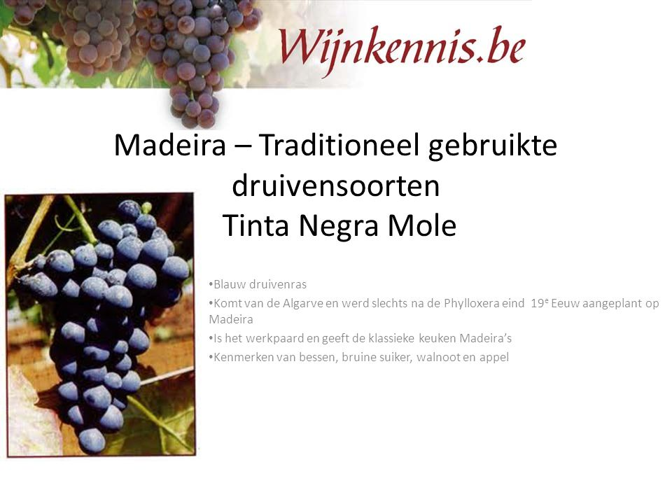 Madeira – Traditioneel gebruikte druivensoorten Tinta Negra Mole
