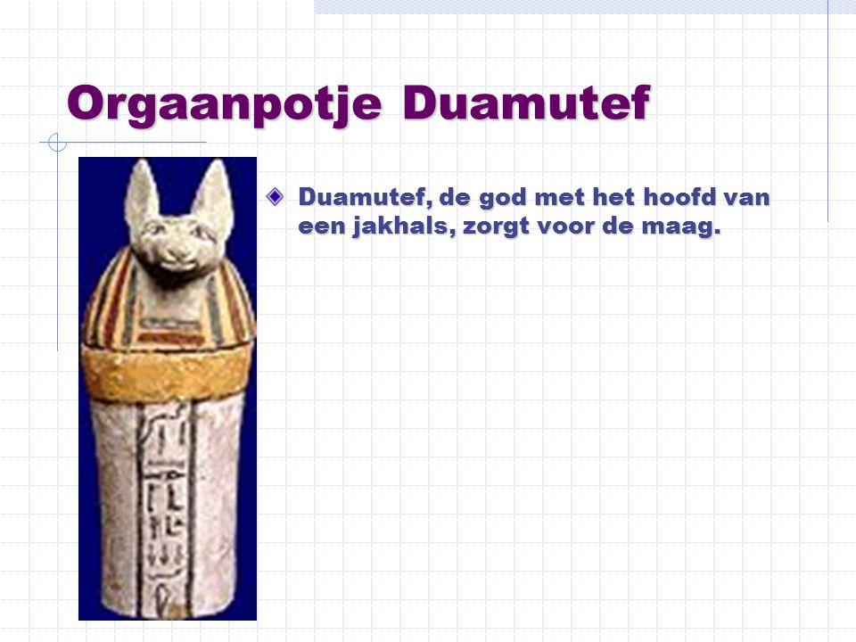 Orgaanpotje Duamutef Duamutef, de god met het hoofd van een jakhals, zorgt voor de maag.