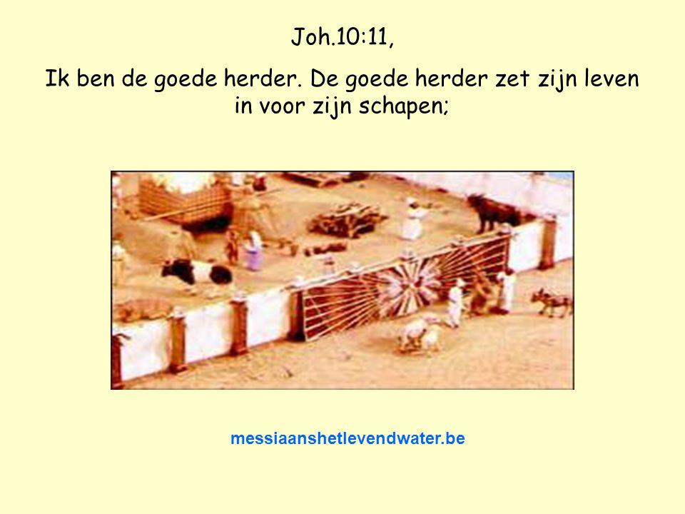 Joh.10:11, Ik ben de goede herder.