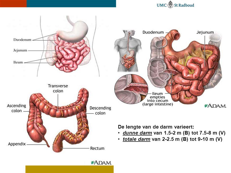 De lengte van de darm varieert: