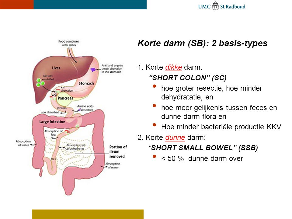 Korte darm (SB): 2 basis-types