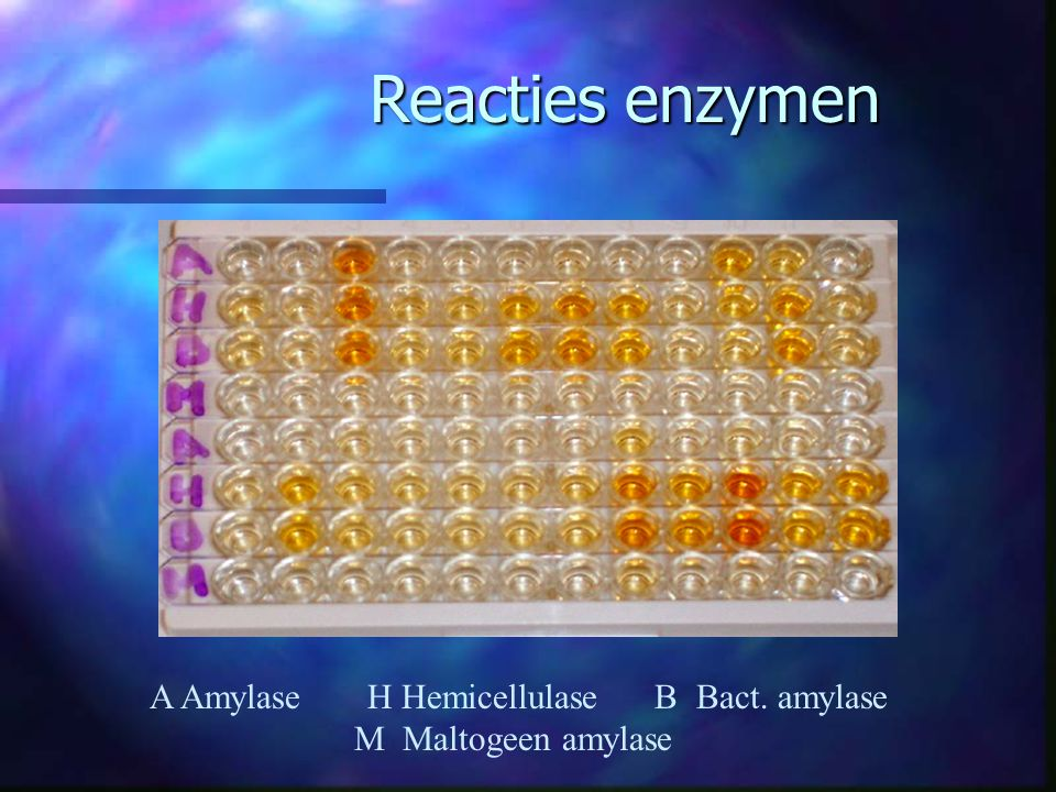 Reacties enzymen A Amylase H Hemicellulase B Bact.