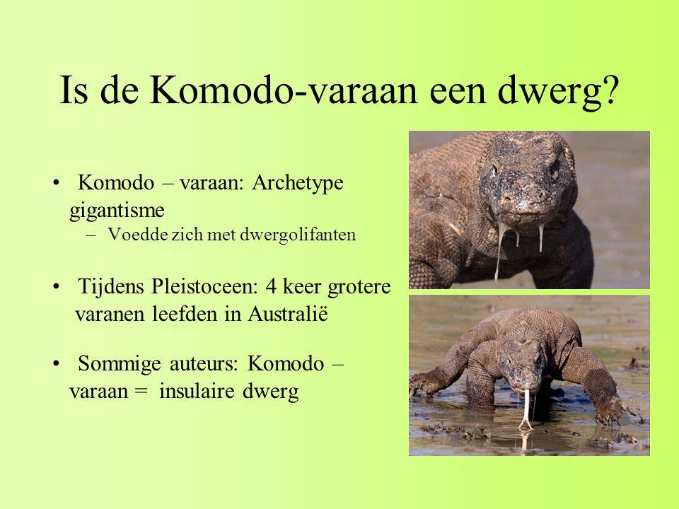 Is de Komodo-varaan een dwerg