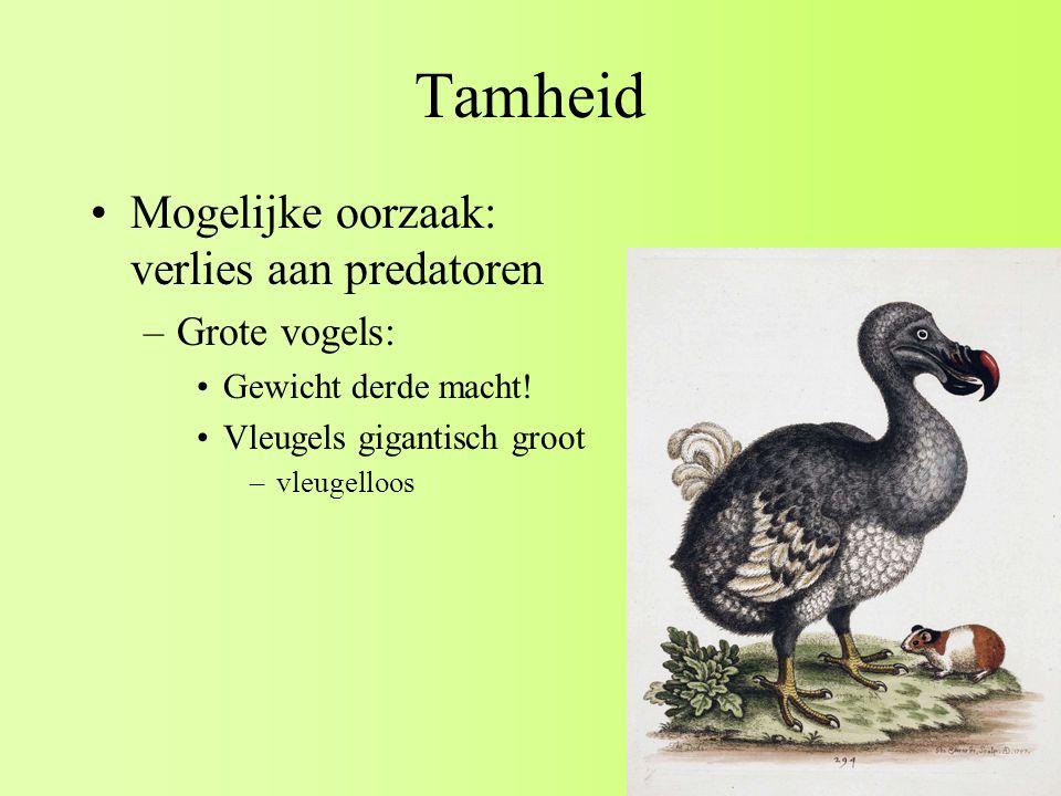 Tamheid Mogelijke oorzaak: verlies aan predatoren Grote vogels: