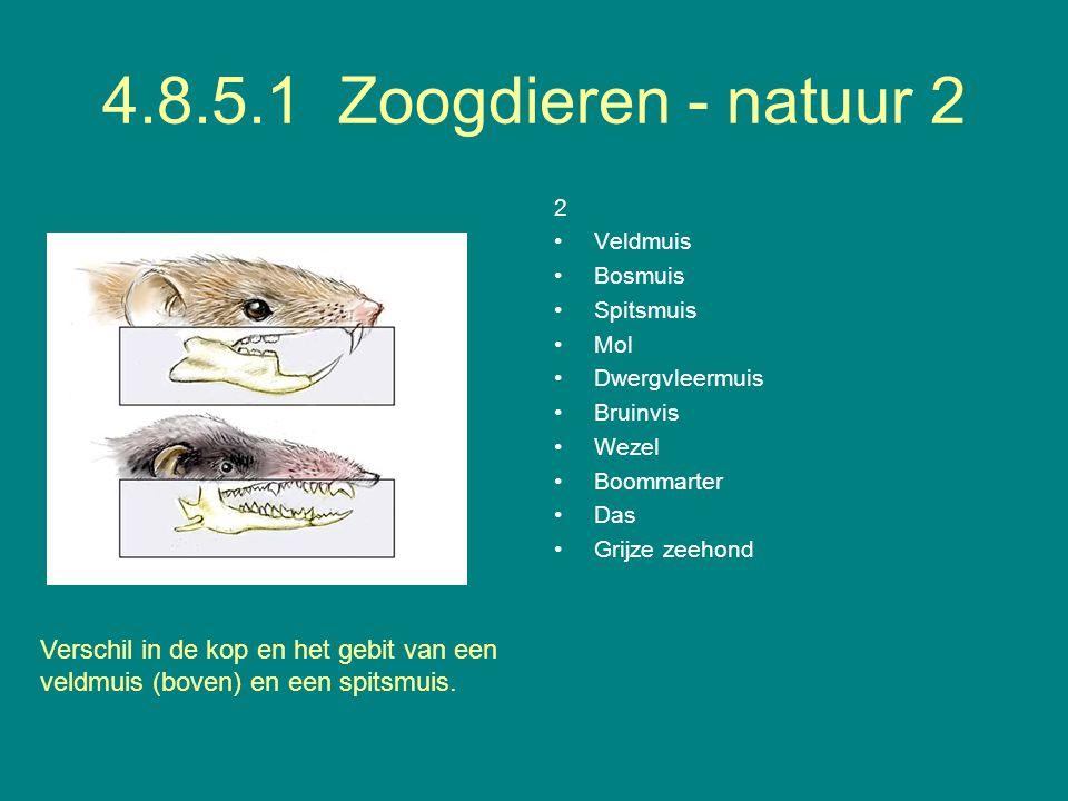 4.8.5.1 Zoogdieren - natuur 2 2. Veldmuis. Bosmuis. Spitsmuis. Mol. Dwergvleermuis. Bruinvis.