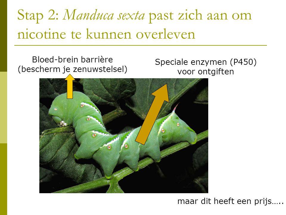 Stap 2: Manduca sexta past zich aan om nicotine te kunnen overleven