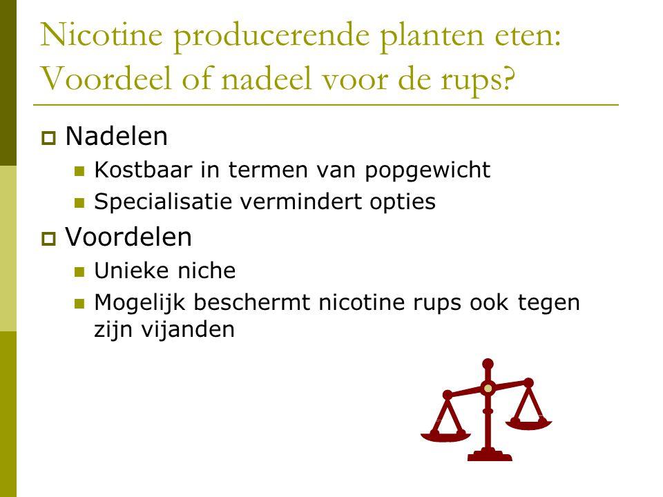 Nicotine producerende planten eten: Voordeel of nadeel voor de rups