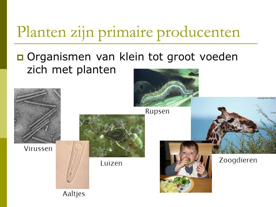 Planten zijn primaire producenten