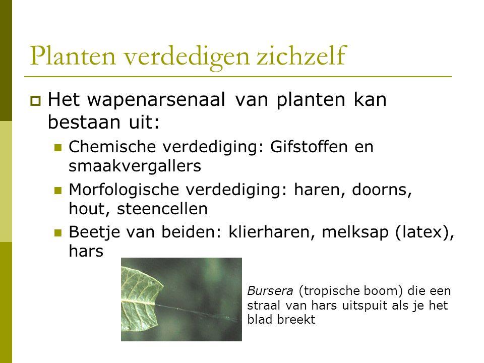 Planten verdedigen zichzelf