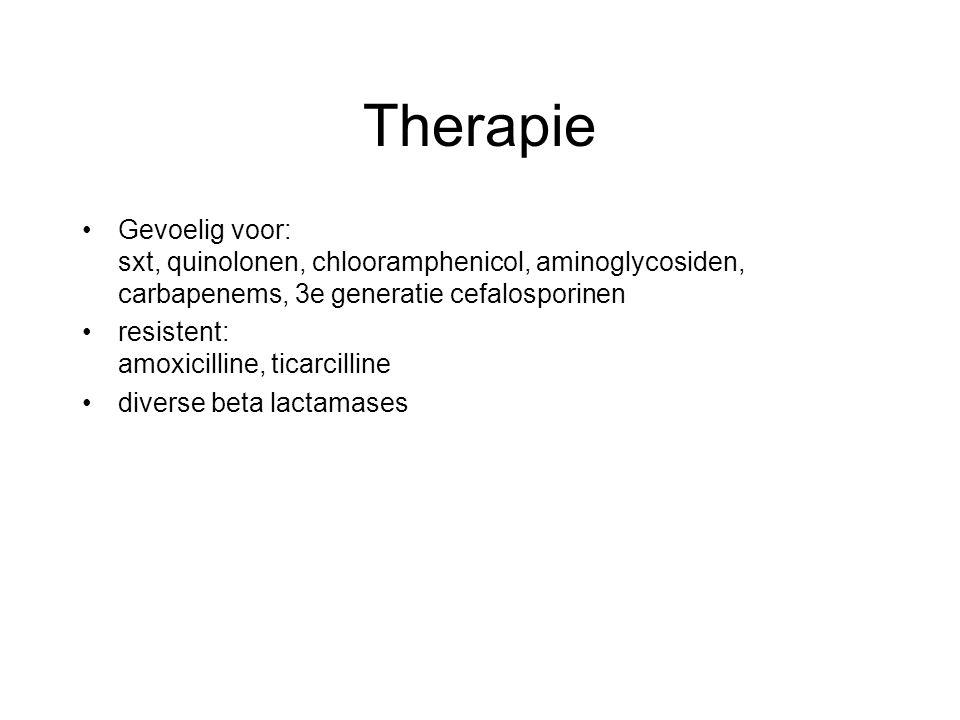 Therapie Gevoelig voor: sxt, quinolonen, chlooramphenicol, aminoglycosiden, carbapenems, 3e generatie cefalosporinen.