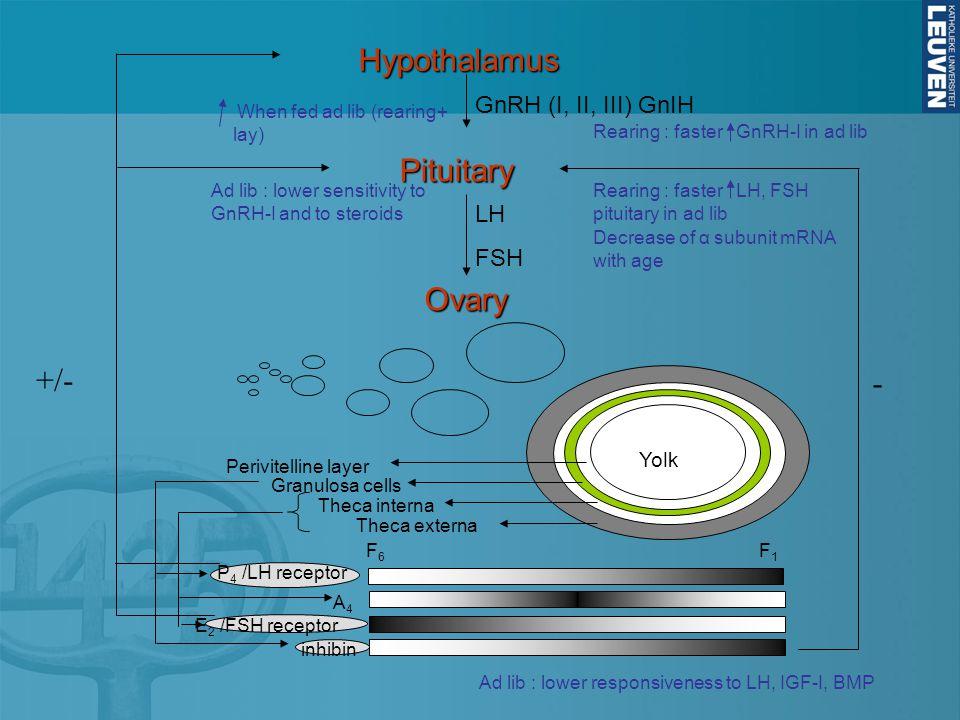 Hypothalamus Pituitary Ovary +/- - GnRH (I, II, III) GnIH LH FSH Yolk
