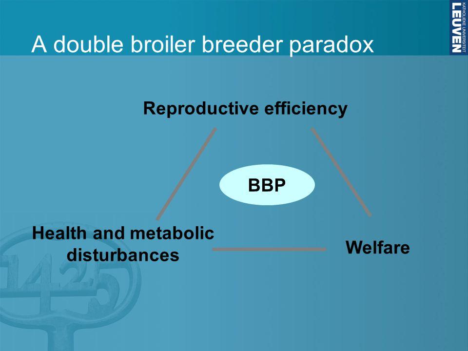 A double broiler breeder paradox