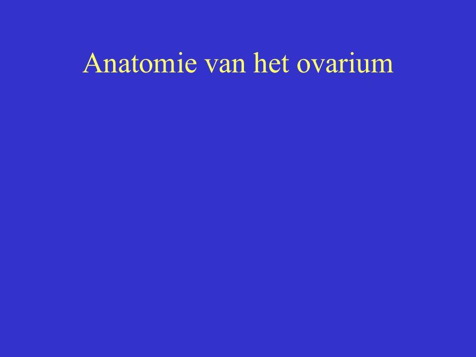 Anatomie van het ovarium