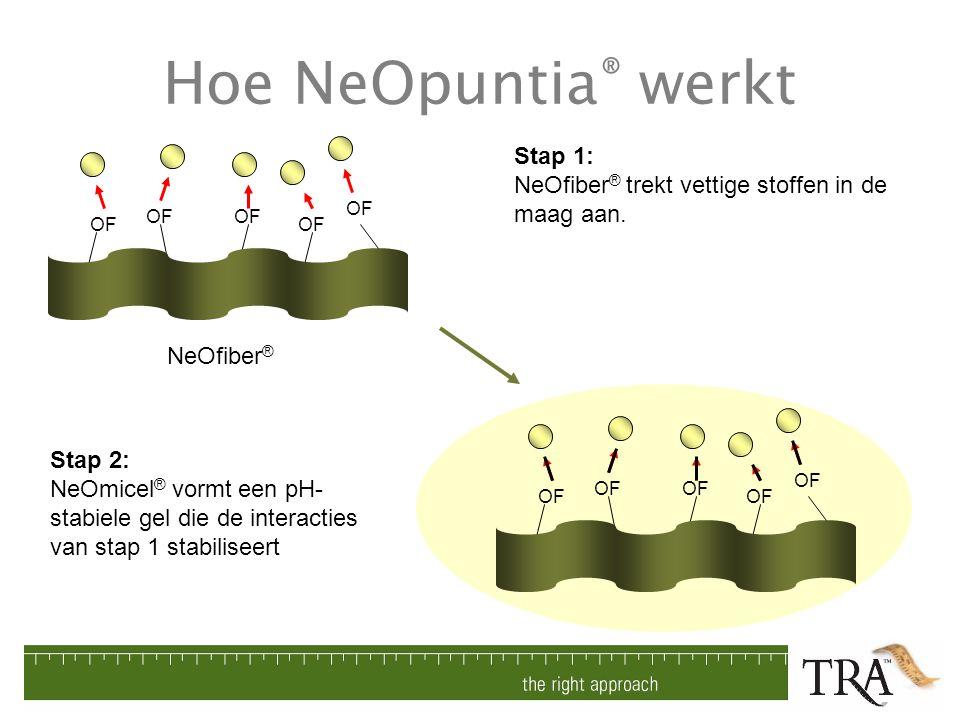 Hoe NeOpuntia® werkt Stap 1: NeOfiber® trekt vettige stoffen in de maag aan. OF. NeOfiber®