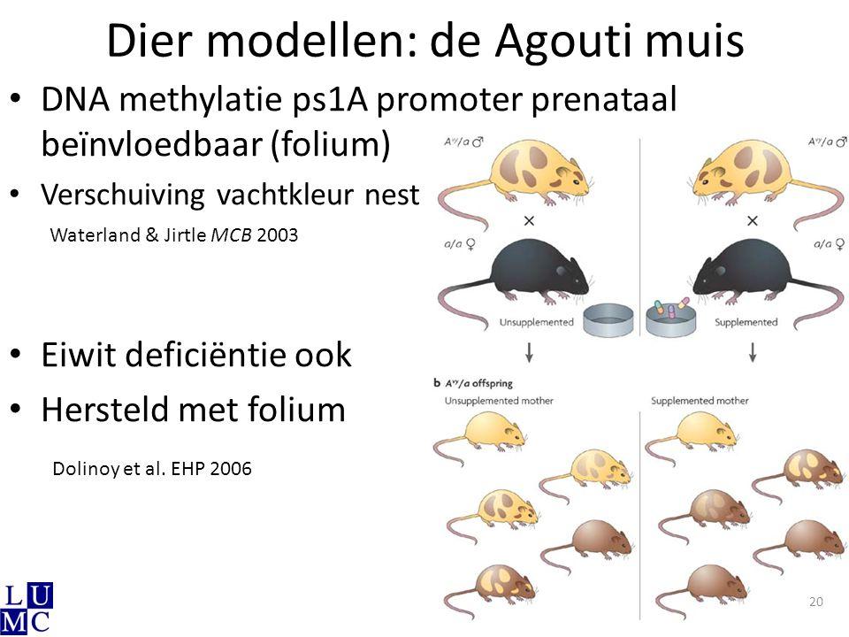 Dier modellen: de Agouti muis