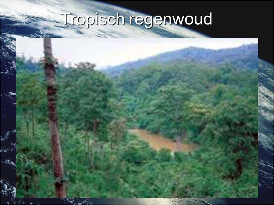 Tropisch regenwoud