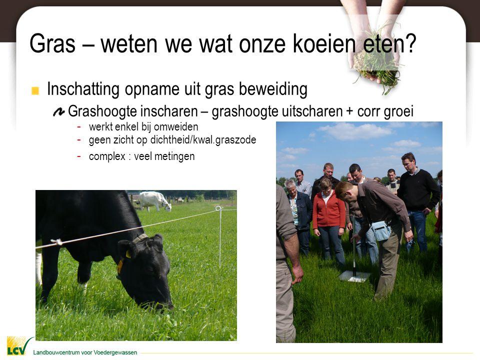 Gras – weten we wat onze koeien eten