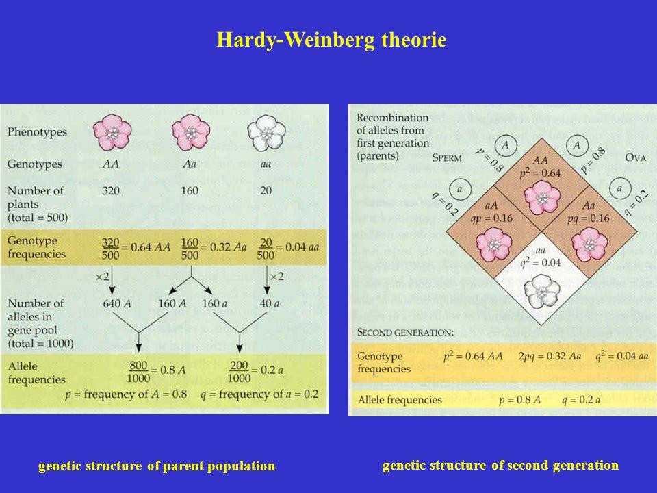 Hardy-Weinberg theorie