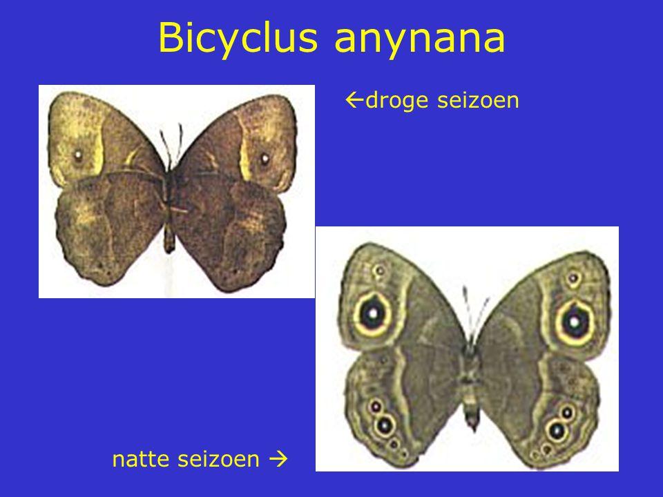 Bicyclus anynana droge seizoen natte seizoen 