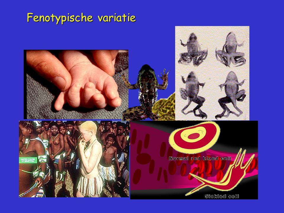 Fenotypische variatie