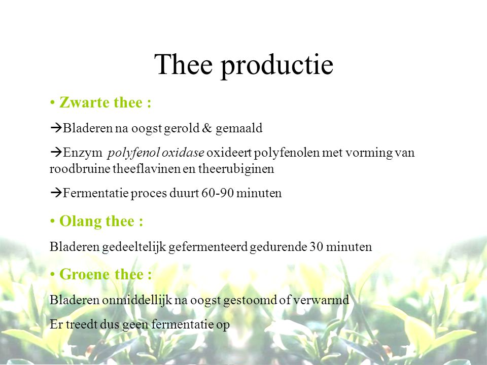 Thee productie Zwarte thee : Olang thee : Groene thee :
