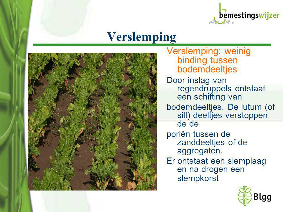 Verslemping Verslemping: weinig binding tussen bodemdeeltjes