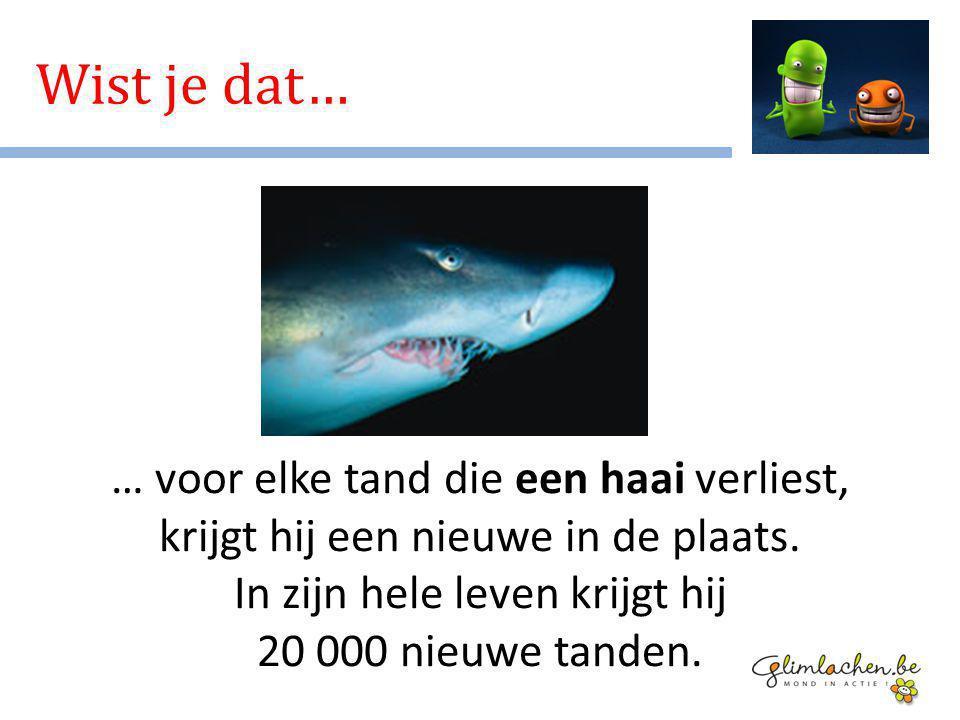 Wist je dat… … voor elke tand die een haai verliest, krijgt hij een nieuwe in de plaats.
