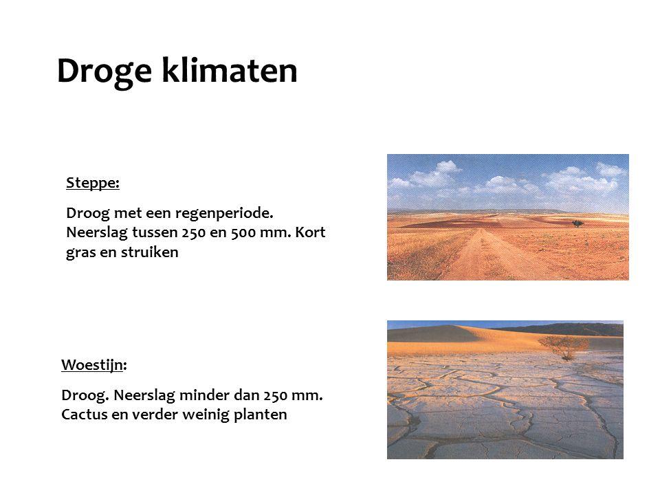 Droge klimaten Steppe: