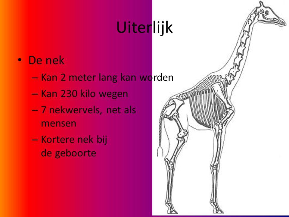Uiterlijk De nek Kan 2 meter lang kan worden Kan 230 kilo wegen