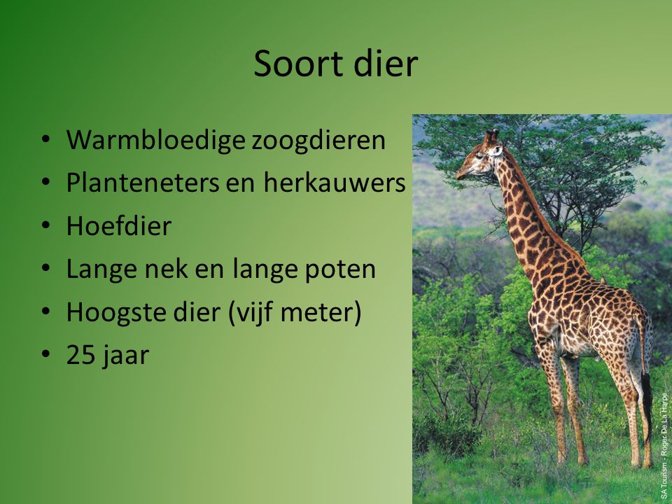 Soort dier Warmbloedige zoogdieren Planteneters en herkauwers Hoefdier