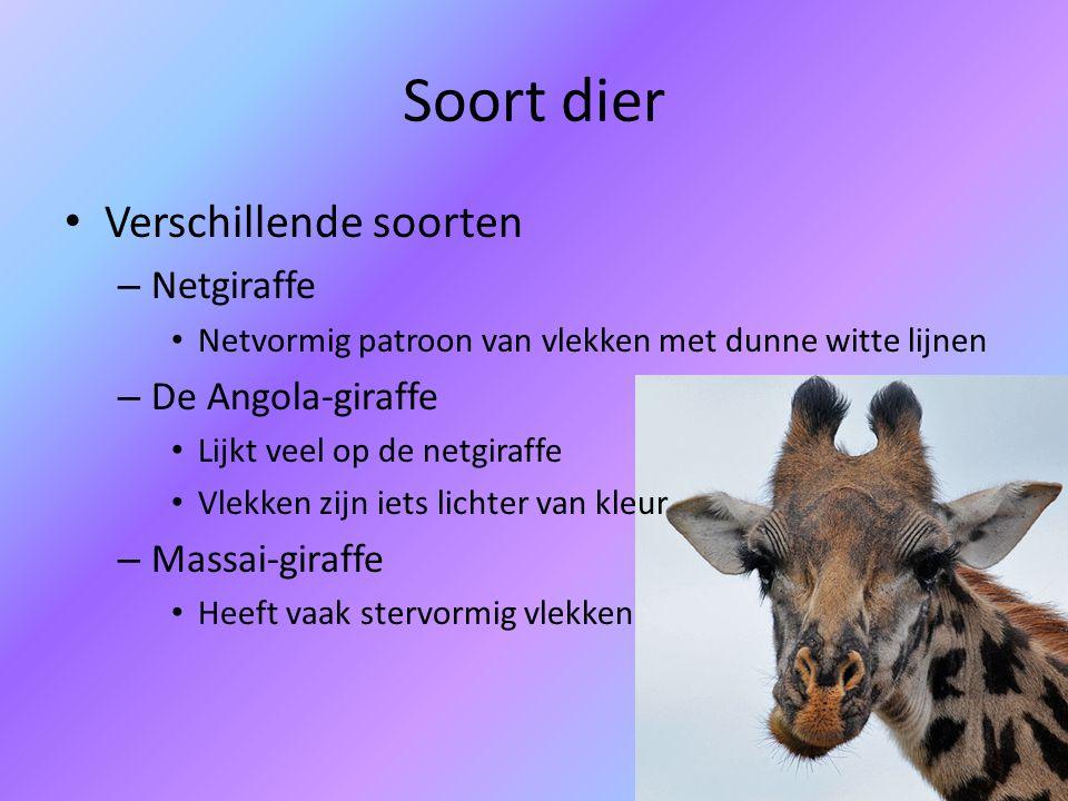 Soort dier Verschillende soorten Netgiraffe De Angola-giraffe