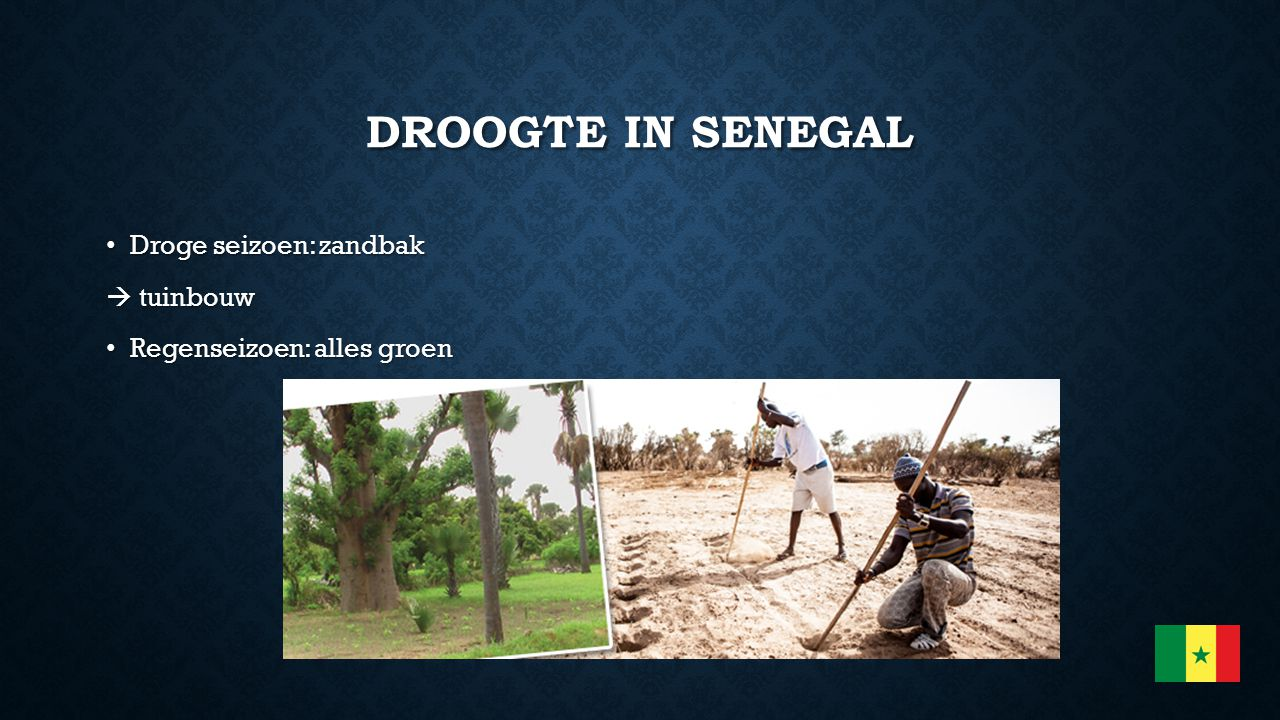 Droogte in Senegal Droge seizoen: zandbak  tuinbouw