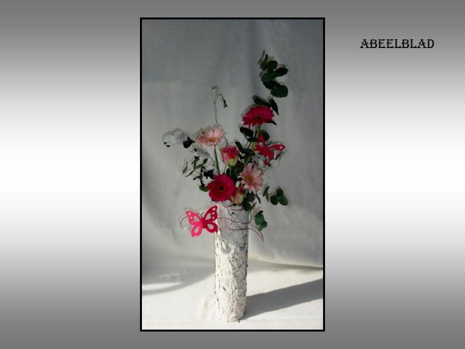 abeelblad