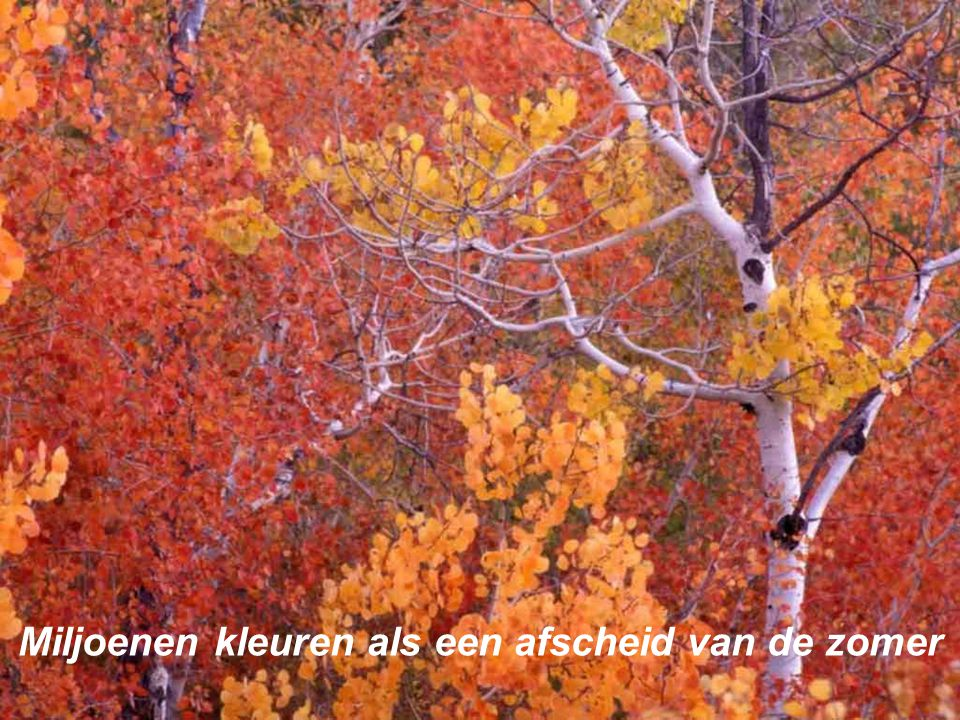 Miljoenen kleuren als een afscheid van de zomer
